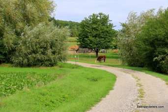 country road with cows