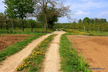 country road through orchard