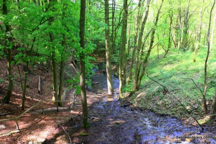 lush forest with brook