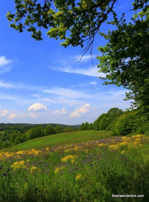 open field of wild flowers
