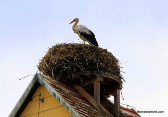 stork nest on house