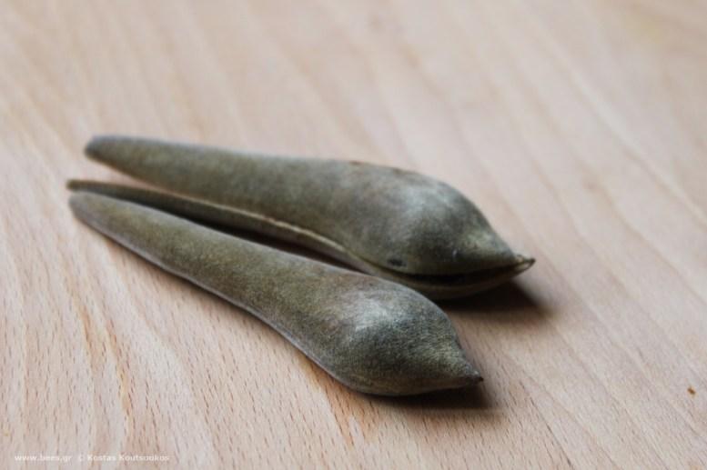 σπόρος γλιτσίνιας wisteria sheed