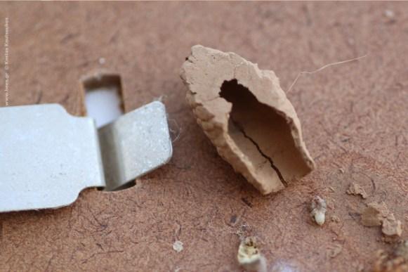 φωλιά Sceliphron curvatum, το σπασμένο χωμάτινο κουκούλι, αποκαλύπτει το περίεργο περιεχόμενο του