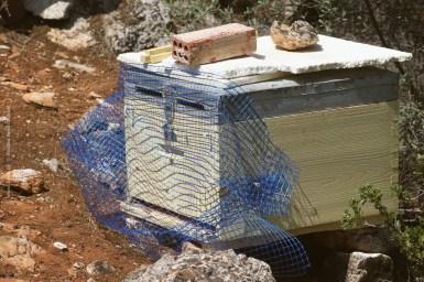 Η τοποθέτηση είναι εύκολη. Δεν λείπουν τα τεχνολογικά προηγμένα μελισσοκομικά εργαλεία, φελιζόλ για τον ήλιο και μεταχειρισμένο τούβλο για τη στήριξη...