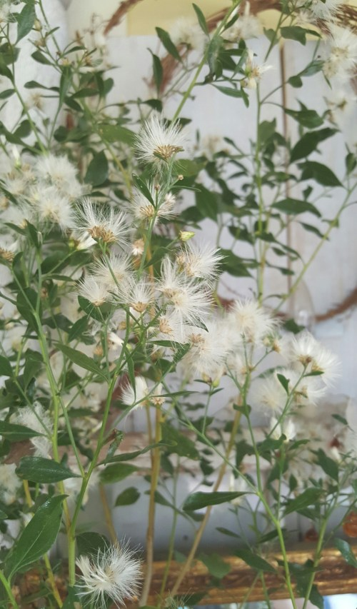 White Winter Flowers and Dried Branches in Home Decor