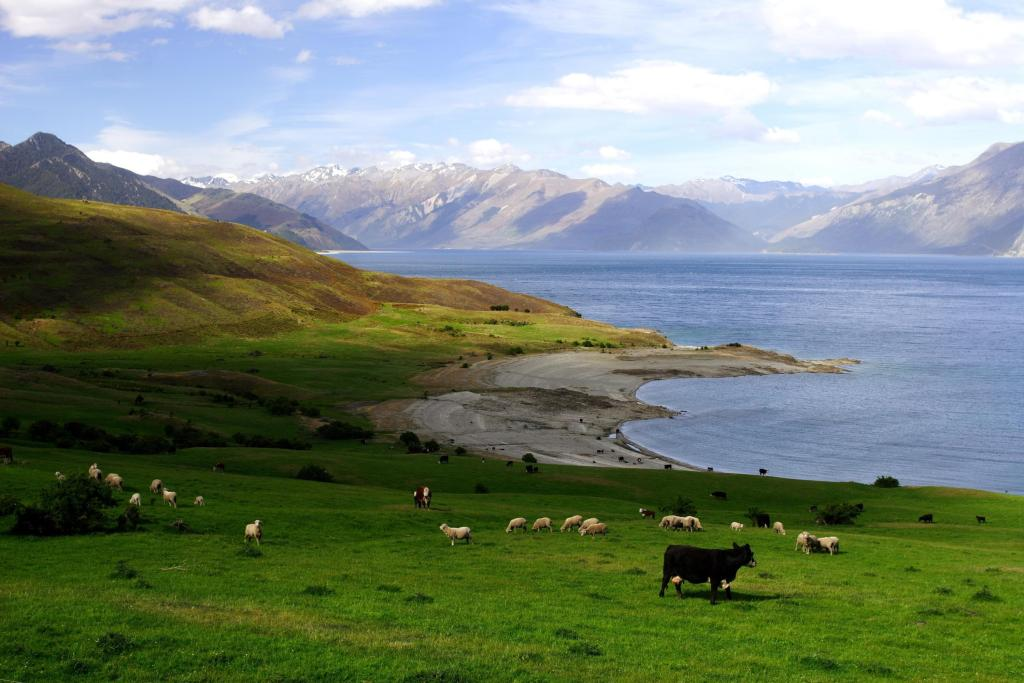 peaceful rural new zealand