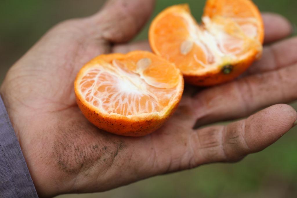 佛利蒙柑(一箱10斤) | 溪底遙學習農園