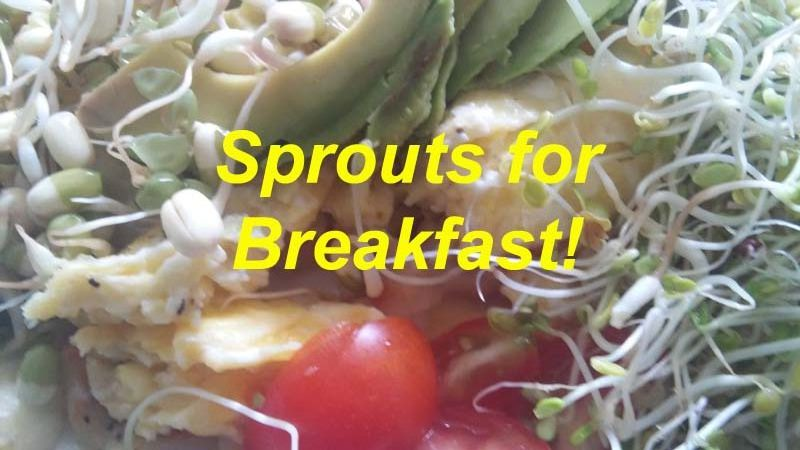 Sprouts for Breakfast?  You Betcha!!!