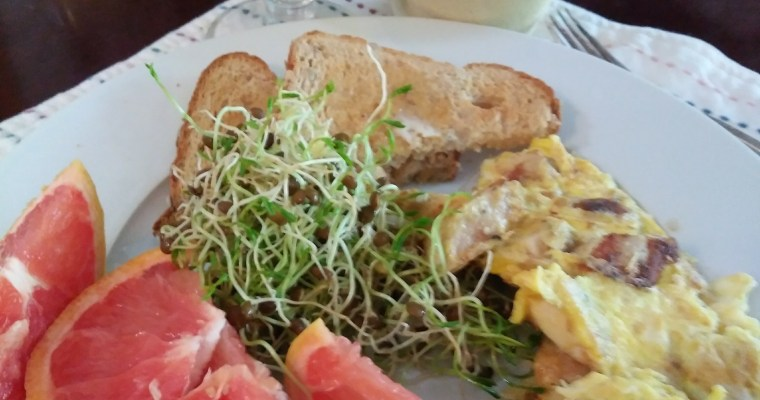 Here Comes Spring! And More Sprouts for Breakfast!