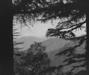treesandsnows