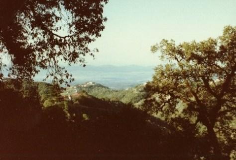 view-of-wynberg