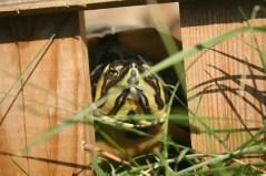 turtle2006