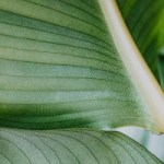 buy houseplants online
