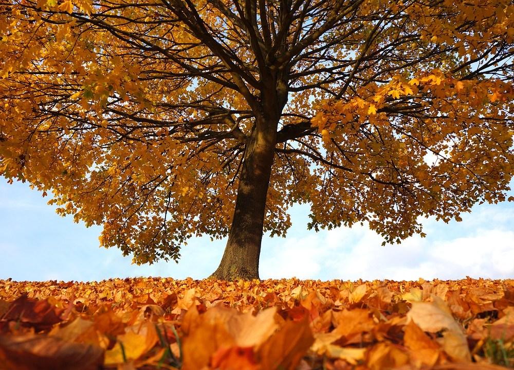 autumn-1795950_1280