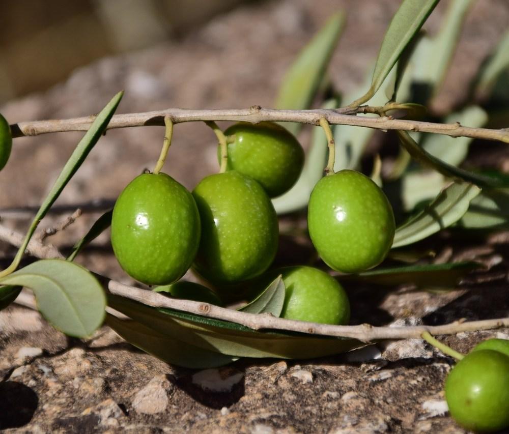 olives-1757221_1280