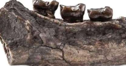 Ancient Primate Species Found in India 83 Behind History
