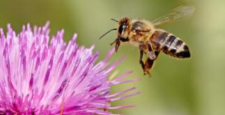 8 Super Facts about Honey Bees 2 Behind History