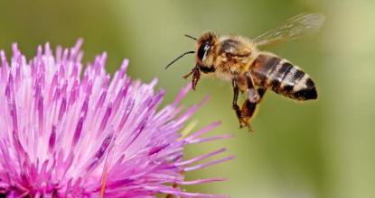 8 Super Facts about Honey Bees 20 Behind History