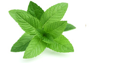 pepperment beneficial for health