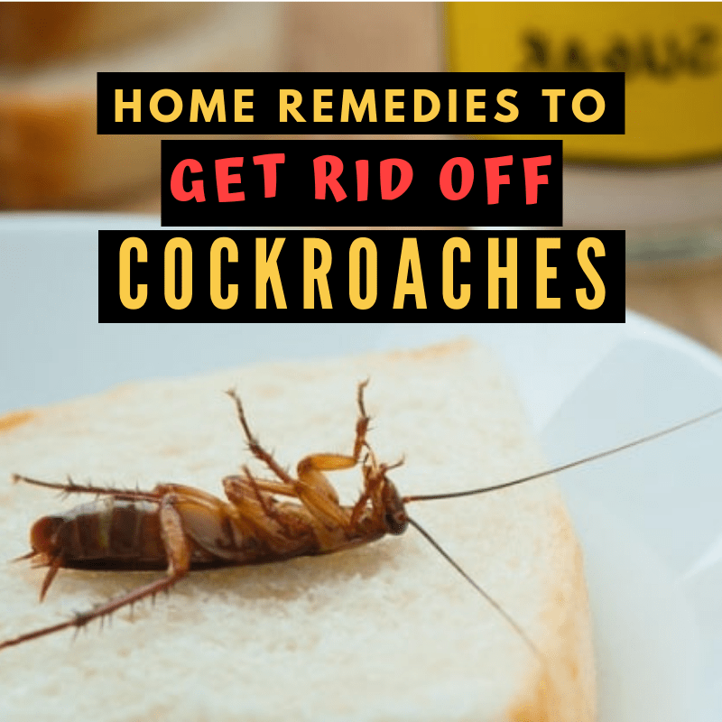 11 Home Remedies for Cockroaches