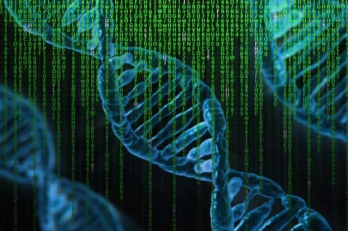 alzheimer's genes
