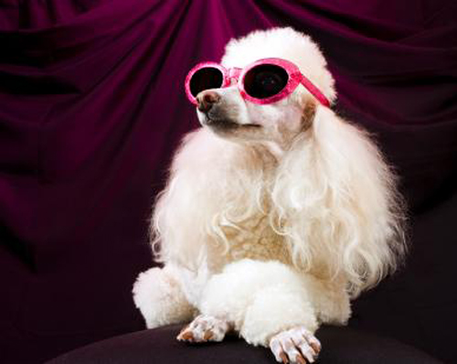 snob La Wlooo!!!...Lifestyles Of The CLASSE And The Cavemen!