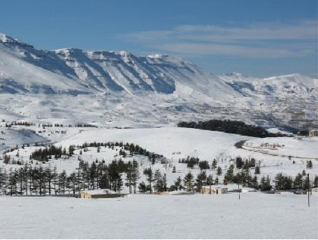 Join Cyclamen For Snowshoeing At The Cedars