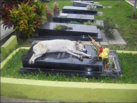 Dog Lies on Grave, Melts Internet