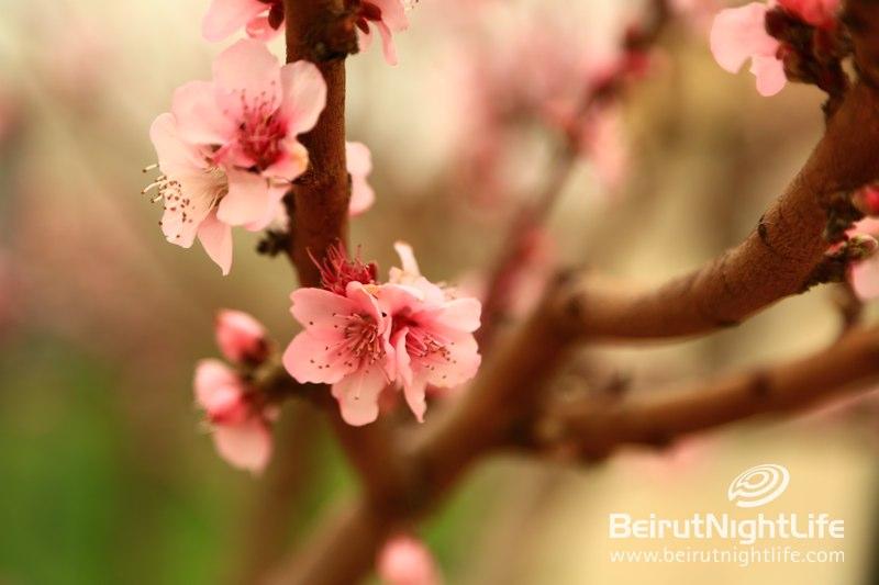 Beautiful Saidoun Jezzine is in Bloom