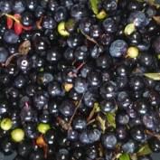 Orensade blåbär