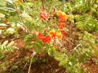 Mycket botanik blev det på dagens tur