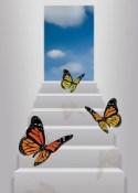 Butterflies door open