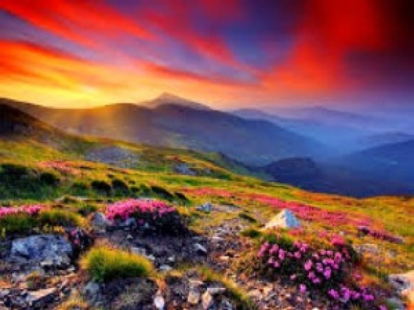 mountain flowers and flaming skies