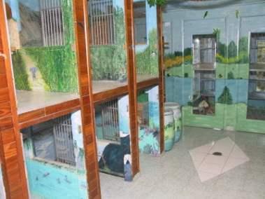 Large cat suites