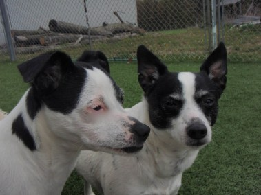 Dogs hanging out at our Oakville dog kennel