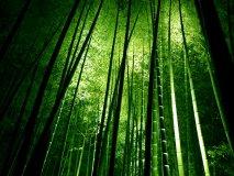 Kuat Tekan dan Angka Poisson Bambu Petung Laminasi