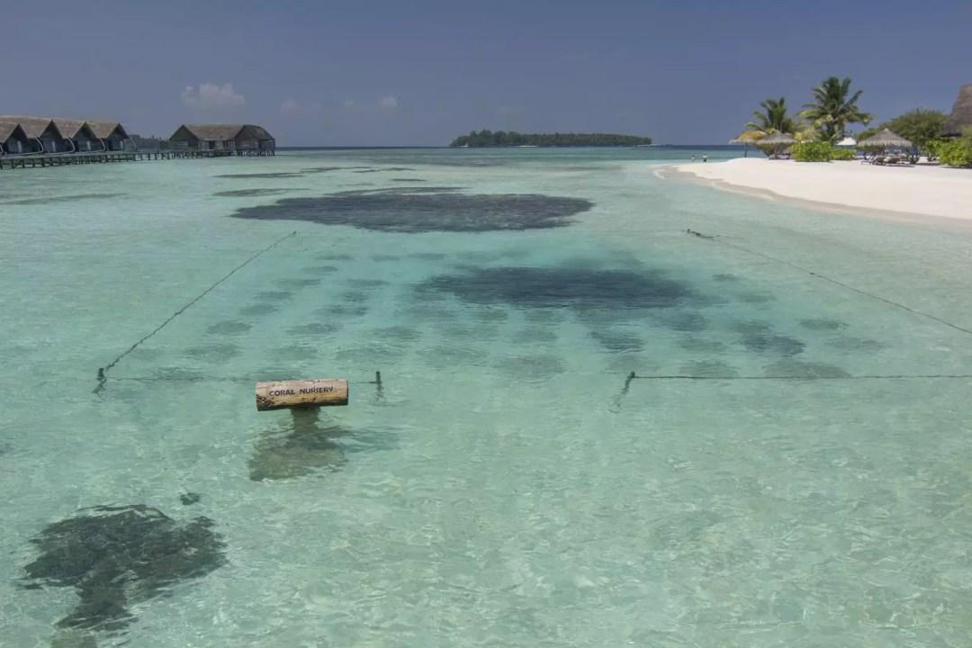 COMO Cocoa Island coral nursery