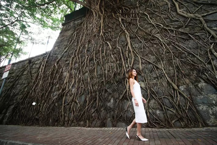 Sai-Wan---Forbes-Street-Wall-Trees