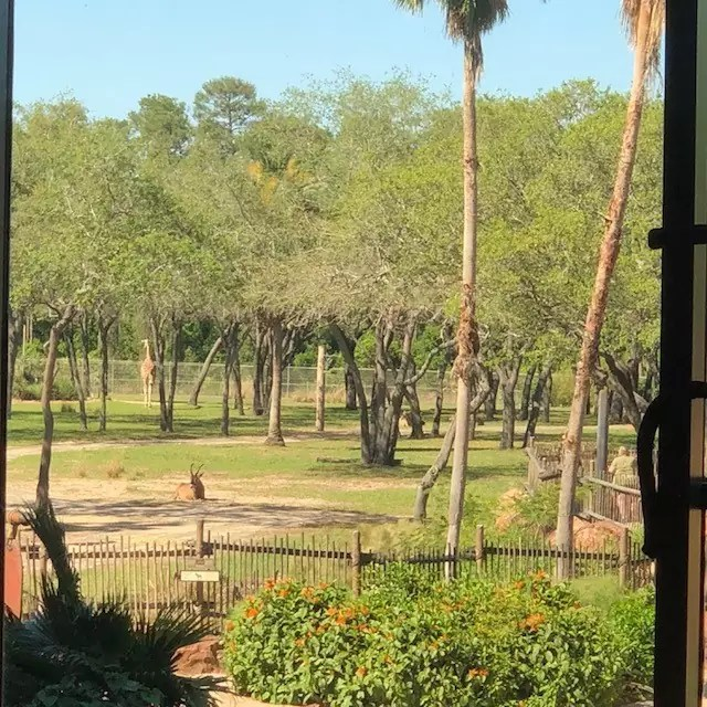 Animal Kingdom Lodge view WDW Orlando, cool hotels in orlando florida