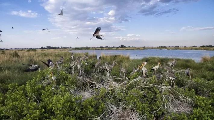 Okavango Delta, Botswana - theworldpursuit; Best drones for travel