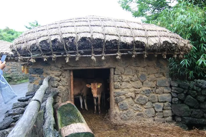 Seongeup Folk Village houses, things to do in jeju island; what to do in jeju island, jeju island attractions