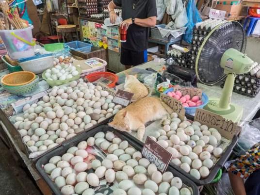 egg cat maeklong railway market, Day trips from Bangkok -Amphawa Floating Market, Maeklong Railway Market, Ban Bang Phlap