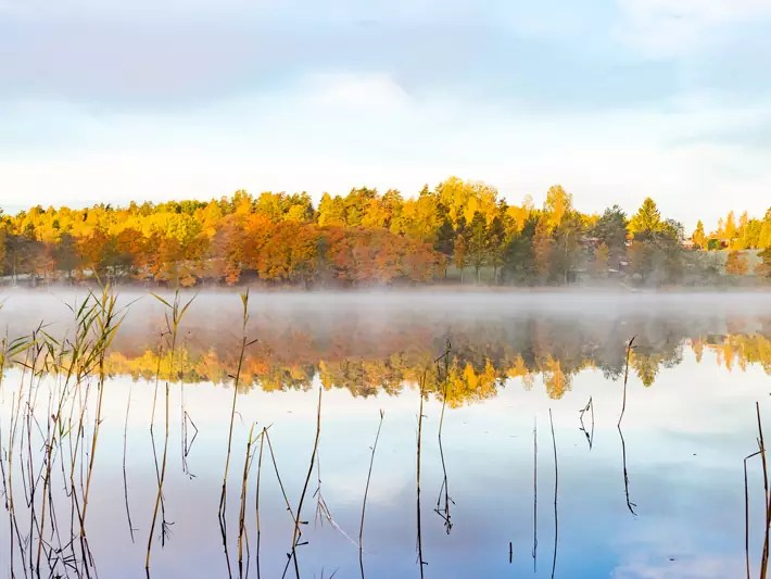 sunrise, golden hour lake, Nuuksio National Park