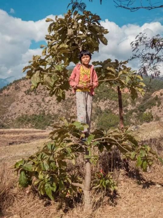 child climb tree, Chimi Lhakhang Phallus Bhutan