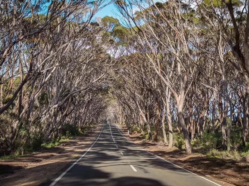 road trip, Things-to-do-in-Kangaroo-Island-Australia
