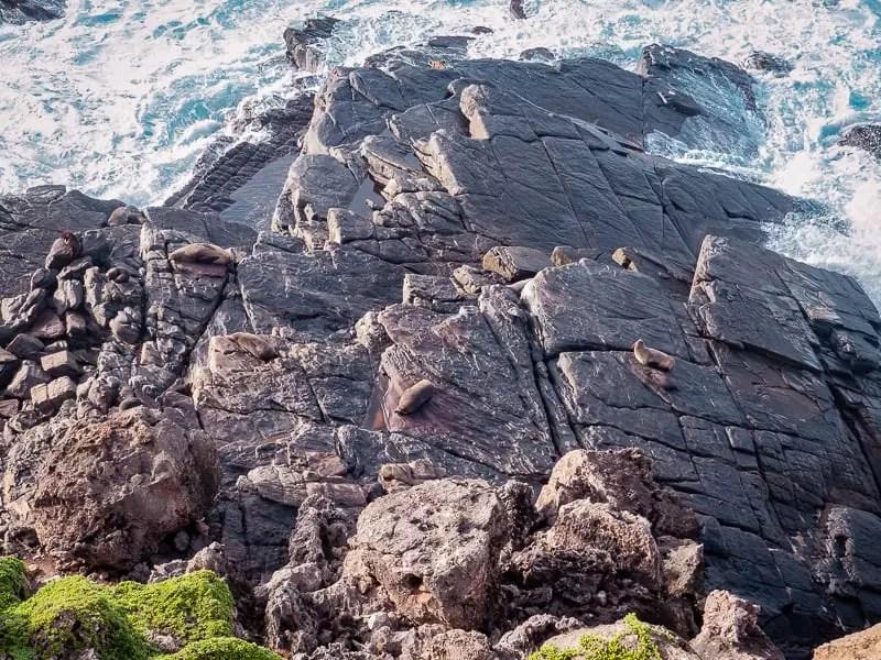sea lion, seals-Things-to-do-in-Kangaroo-Island-Australia
