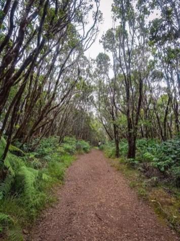 waimea canyon trail start, best hikes in kauai, hawaii