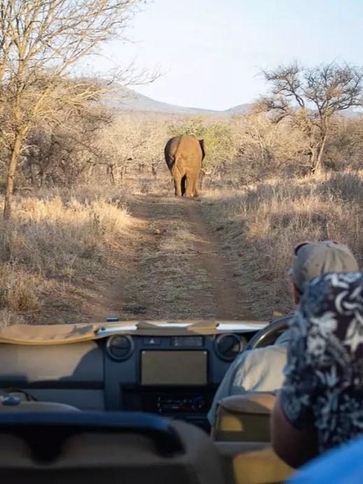 elephant cross road, Rhino-River-Lodge-South-Africa-safari-game-drive