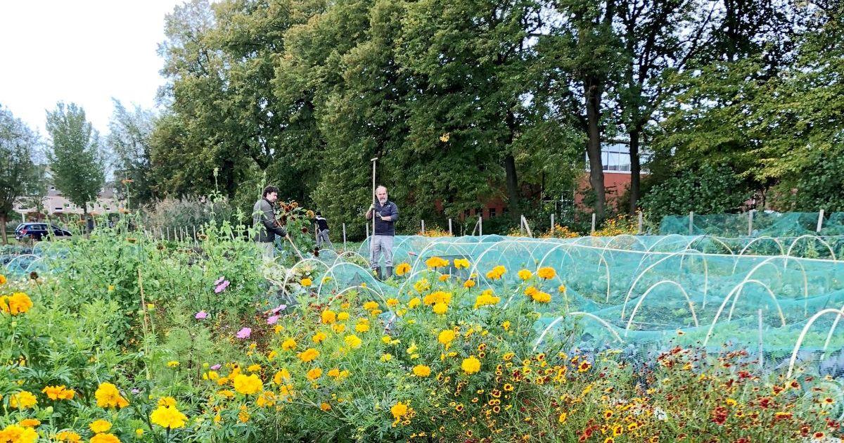 Stadslandbouw Van Ruytenburch Vlaardingen | Van Ruytenburch Stadsakker | beleveninvlaardingen.nl #beleveninvlaardingen #vlaardingen
