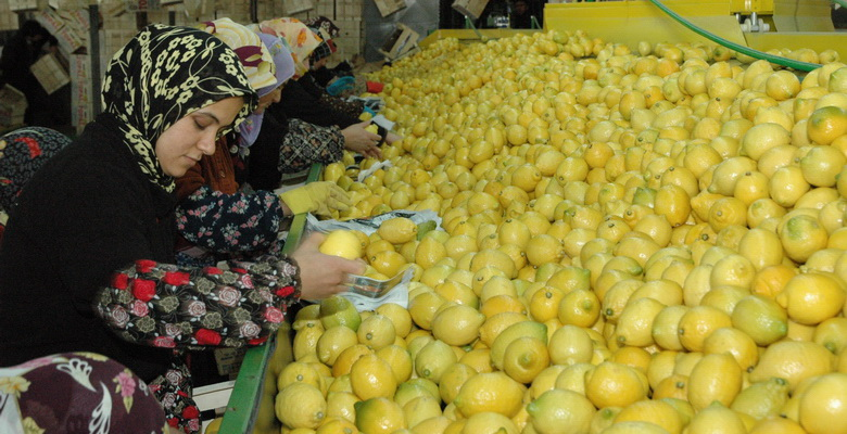 Limonun Başkenti Erdemli
